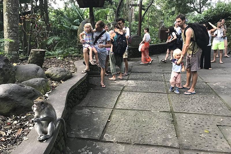 Ausflug nach Ubud, Monkeyforest